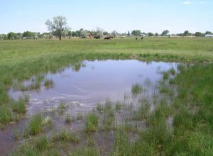 flood-irrigation