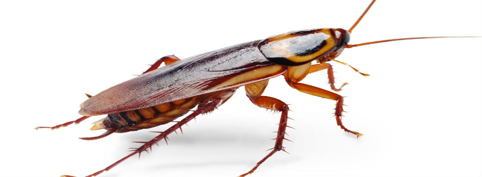 What to do About a Roach Problem