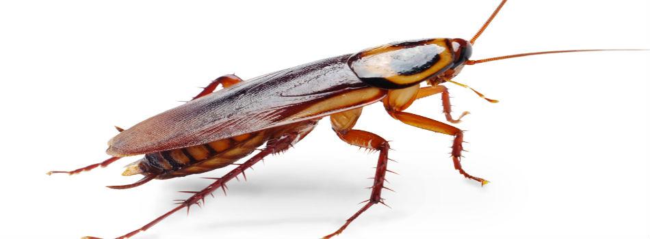 Kill-Roaches