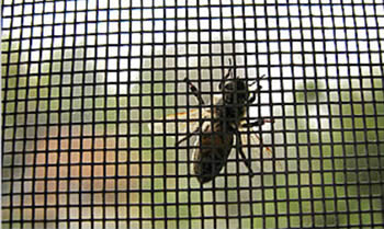 fiber-insect-screen-bee