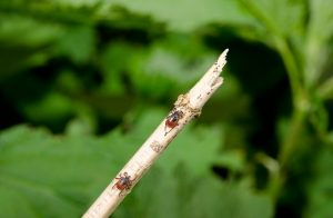 How To Get Rid Of Ticks In Your Yard The Tick And