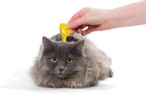 ticks-on-cats-2