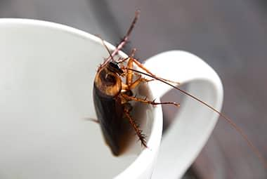 cockroach indoors house get rid
