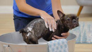 tick shampoo dip dog
