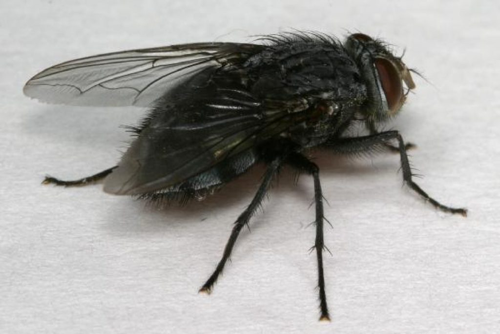 How to Keep Black Flies Away | The Tick and Mosquito Project