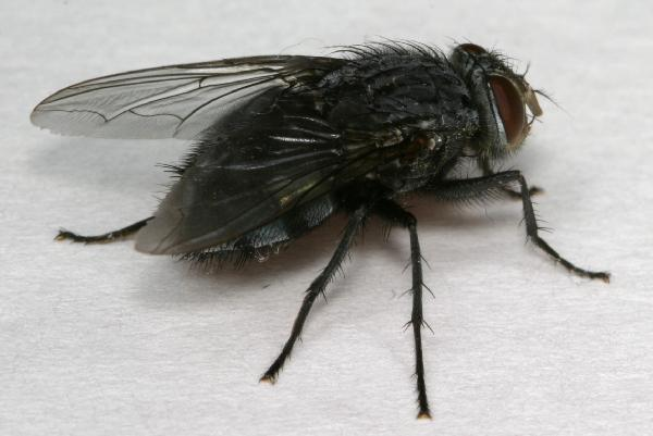 How To Keep Black Flies Away