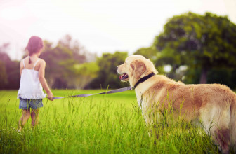 Controlling Mosquitoes in Dogs and Pets