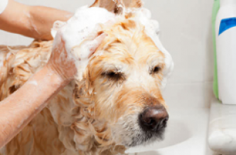 Preventing Ticks In Dogs And Pets