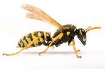 Keeping Wasps and Hornets Away from the House